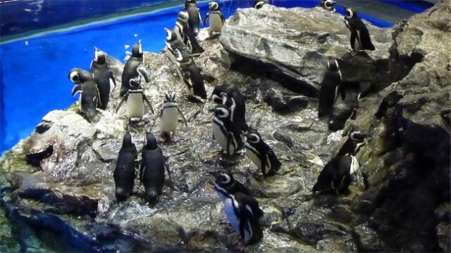 ペンギン可愛い、ときどき見たくならない!?